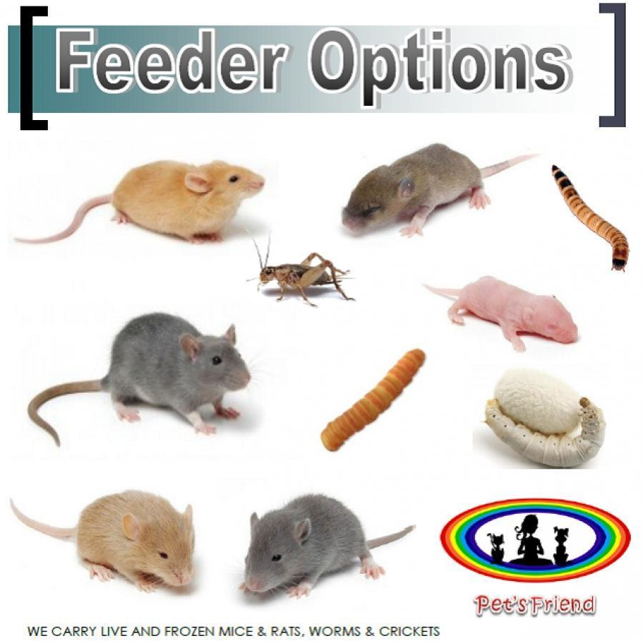 <small><del>FEEDER INSECTS & RODENTS</del></small><br />Happy FEEDER INSECTS & RODENTS